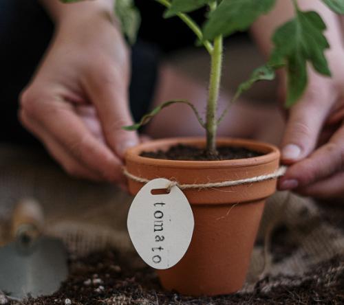 Asik! Akademi Berkebun Kembali Digelar, Yuk Buruan Daftar